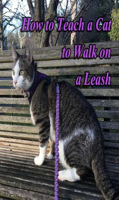 Not all cats will be able to find the delights in walking outdoors on a leash. Before you consider taking your cat on an adventure, consider her individual temperament and personality. Cats who do best on leashes are ones who are naturally outgoing and brave