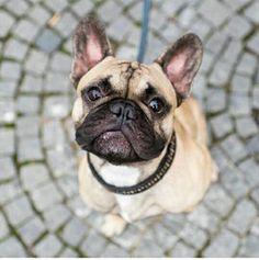 Hallo ich bin Leo aus München . Ich bin 2 Jahre alt und ich liebe spielen :)