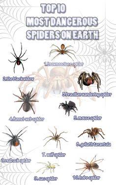 56 best dangerous spiders images spider bites black widow black rh pinterest com