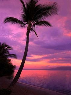 Beach Purple Sunset Backdrop - 388 We offer our photography backdrops in many material options with thousands of styles to choose from. Read below for more details on each of the materials we offer. DURA DROPS AND BABY DROPS - MATTE VI Palm Tree Sunset, Sunset Beach, Palm Trees, Background For Photography, Photography Backdrops, Nature Photography, Photo Backdrops, Photography Tips, Photography Tutorials