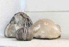 Fossilized sea urchins from Denmark