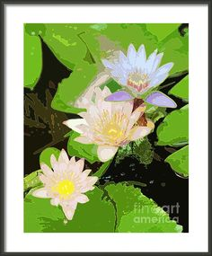 Water Lily Fun Framed Print By Flamingo Graphix John Ellis. Digitally enhanced photo available in many formats, prices and sizes.