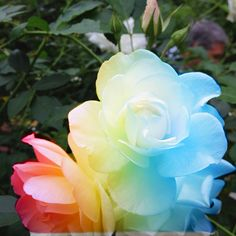 I chose this picture because I love the use of the different colors. The photography obviously took a picture of real white flowers and then edited them to give them a rainbow/ tye dye look.