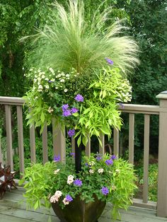 Basket Column contains coral and purple verbena, lacy sweet potato vines (ipomoea), pale yellow million bells (petunias), and a centerpiece of annual grass.