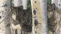 """I think I nearly stopped breathing! One of my favourites, """"Brothers and Sisters"""" by Judy Larson. See if you can spot the hidden 'fourth wolf' ; Wildlife Paintings, Wildlife Art, Horse Paintings, Large Canvas, Large Art, Image Key, Hidden Images, Scratchboard, Back Art"""