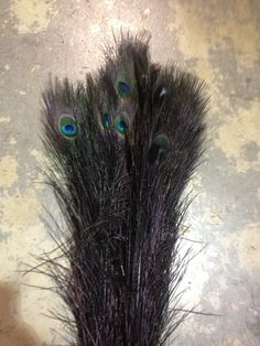 "30 - 40"" Dyed #Peacock Stem- Black- Per 100"