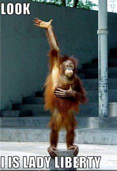 Monkey funny pic