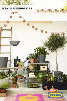 Get creative with your gardening! When it comes to plants, you can stack it, hang it or dig it - all within your budget. Find IKEA ideas in our Spring Refresh Guide.