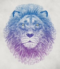 Poster | FACE OF A LION von Rachel Caldwell | more posters at http://moreposter.de