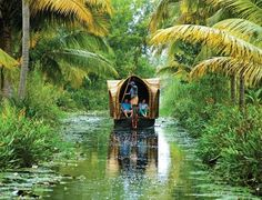 We offers best of Kerala honeymoon packages for honeymoon tour to enjoy the tourist places in Kerala like Cochin, Periyar, Munnar. For geting all the details on Kerala honeymoon packages plaes make an inquiry. Best Places To Honeymoon, Best Honeymoon Destinations, Travel Destinations, Munnar, Kerala India, South India, Honeymoon Packages In India, Kerala Backwaters, Kerala Tourism