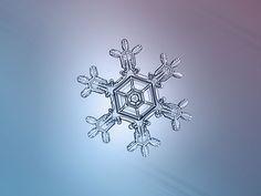 Les flocons de neige tels que vous ne les avez jamais vus à travers de magnifiques clichés macroscopiques