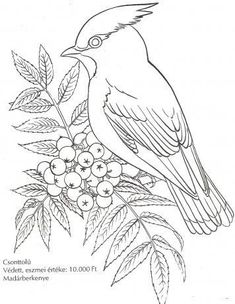 Awesome Most Popular Embroidery Patterns Ideas. Most Popular Embroidery Patterns Ideas. Bird Embroidery, Embroidery Stitches, Embroidery Patterns, Bird Sketch, Art Sketches, Bird Coloring Pages, Coloring Books, Bird Drawings, Animal Drawings