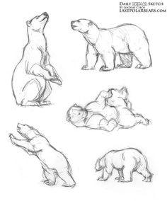 animal drawings sketches Daily Animal Sketch Polar Bear Warm ups The Last of the Polar Bears Pencil Drawings Of Animals, Animal Sketches, Drawing Sketches, Art Drawings, Drawings Of Bears, Drawing Ideas, Copic Drawings, Draw Animals, Polar Bear Drawing