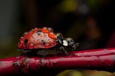 *Ladybug (by Amtrak)