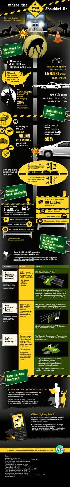 Animals vs. automobiles [Infographic]