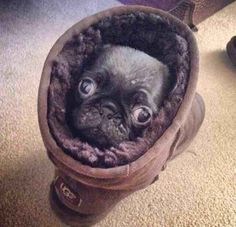 This Pugg who redefined comfort in 2014.