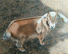 "Baby Goat. Oil on Canvas. 16"" X 20"" Price - $325"