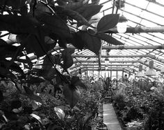 #greenhouse #herbs #monochrome #blackandwhite #bw