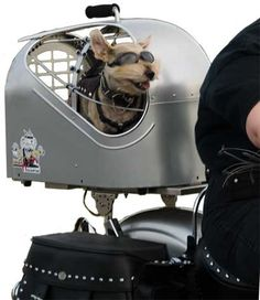 My hubby needs to put this on the bike.  My dreams of having cats in aviator glasses could come true!