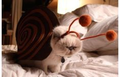 19 Hilariously Cute Animals Dressed As Other Animals (Slide #16) - Pawsome