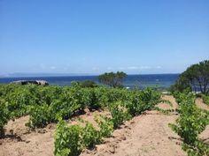Weekend di vino con Agivi in Sardegna