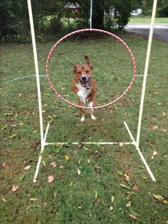 Dog agility jump made from PVC pipe, a hula hoop, and zip-ties!