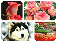 Mensagens-blog Entre Arte, Poesias e Cartões Flores e Belezas da natureza: Belezas da Natureza N32