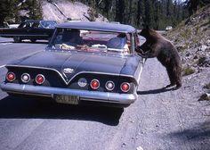 Wyoming c.1965