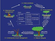 Image result for image of an ecosystem science