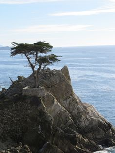 {The Lone Cypress - 17 Mile Drive - Pebble Beach} Kendra Pearce - Tuesday Afternoon - Roadtrippin