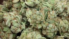 Buy OG Kush is an American marijuana classic, a Southern California original with some of the highest THC levels in the world. With a sativa/indica. Growing Marijuana Indoor, Marijuana Plants, Cannabis Growing, Cannabis Seeds Online, Cannabis Seeds For Sale, Cannabis Oil, Overnight Delivery, Overnight Shipping, Buy Weed