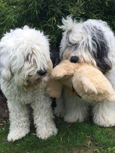 OES love their stuffed animals