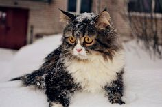 """Nobody told me this pretty white fluff would be so cold!"""