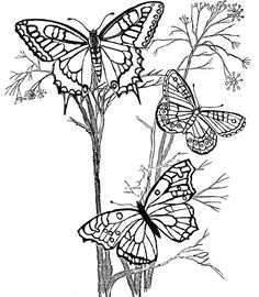 Three Butterflies Alighted In Twig Coloring Pages For Kids Printable