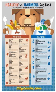 Providing a healthy diet for your dog isn't always so obvious. Most people know the obvious dangers like chocolate and grapes, but did you know that onions & garlic are also toxic to dogs? Also...