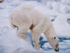 ELIZABETH STUDIOS FABRIC  ICE POLAR BEARS  100% COTTON   BY THE YARD - 36 X 44 WIDE  This polar bear print by Elizabeth Studio features bears on the ice. The biggest bear measures 3.5 x 4 and the fabric is on a 24 repeat. We carry an assortment of high quality cotton fabrics. Fabric cuts are directly off the bolt from a smoke-free environment.  Please wait for a combined invoice for your fabric so we can offer you the lowest shipping price. For larger quantities, we ship by flat rate…