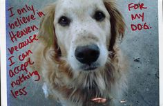 """I only believe in heaven because I can accept nothing less for my dog."" From PostSecret."