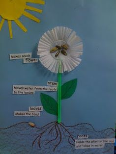 3D plant diagram. Green straws make the stems and cupcake papers make the flower. Sunflower seeds are glued in the middle of the cupcake paper. I also had the kids break apart one seed and put part of the shell down in the soil to represent where the plant sprouted from. Any kind of seed could be used.