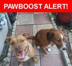 Please spread the word! Trixie Star was last seen in Zephyrhills, FL 33541.    Nearest Address: Near Coats Rd & Five Acre Ln