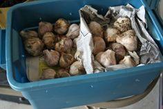 garlic in bin for garage
