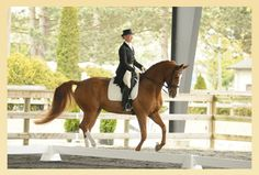 Pilates and Dressage ... lots of Olympic riders use it.