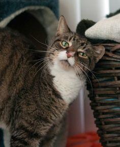 Whiskered Wednesday - Patrick | Modern Cat magazine