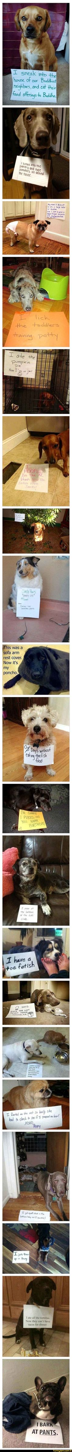54 Ideas Funny Pictures Of Animals Hilarious Dog Shaming New Funny Memes, Funny Memes About Girls, Funny Girl Quotes, Cute Memes, Funny Stuff, Funny Babies, Funny Kids, Funny Cute, Hilarious