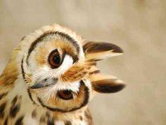 【意外なかわいさ!!】思わずキュンとしてしまうフクロウの画像 36枚 - ペット日和