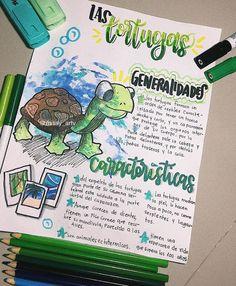 """𝚅𝙰𝙻𝙴𝙽𝚃𝙸𝙽𝙰 on Instagram: """"BUENOS DIAAAAAAS Hoy les traigo un post sobre las tortuguitas, también están en vía de extinción o al menos las marinas, ayudemos a…"""""""