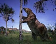 """Megatherium image: """"A prehistoric sloth that lived during the Ice Age when the Saber Tooth cat was alive"""" for benny"""
