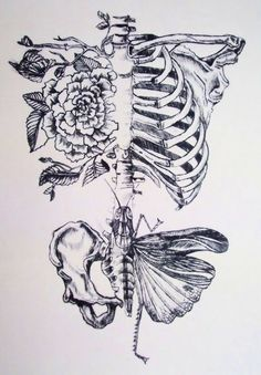 Floral moth skeleton.