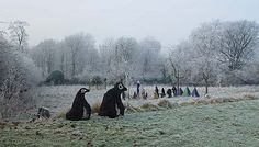 Penguins and Egyptian gods in winter