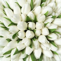 Perfect bouquet of white tulips!