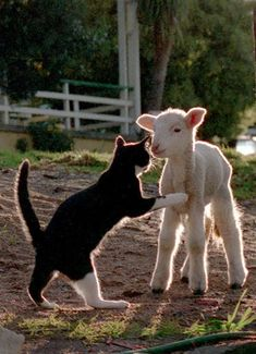 Cat and Lamb by John Lindesay Small